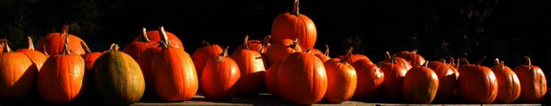 pompoenen kopen halloween noord-holland